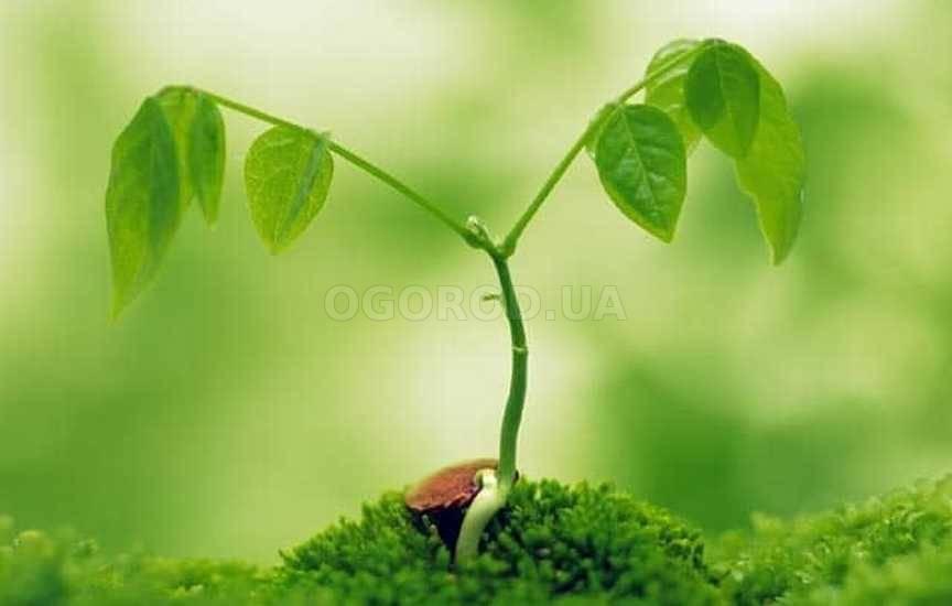 Стимуляторы и регуляторы роста растений