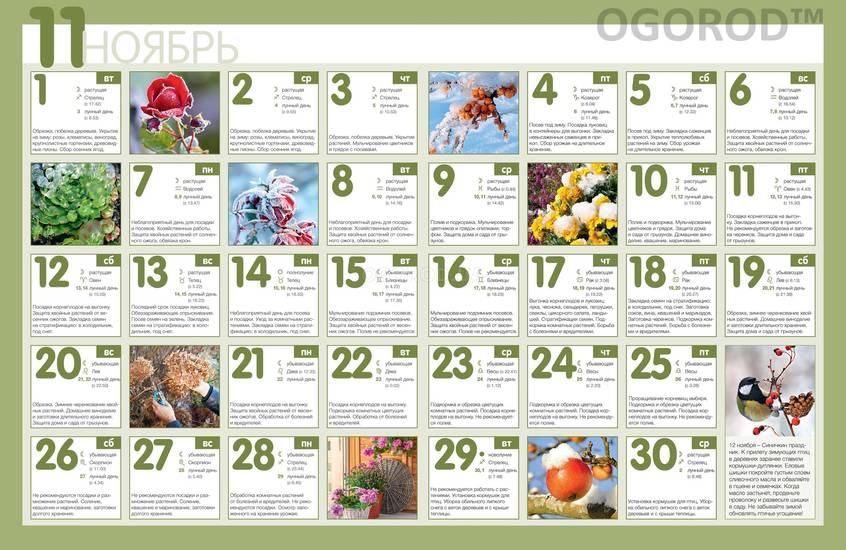 Посевной календарь на ноябрь