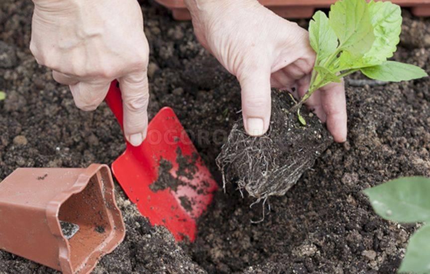 Как сеять цветы в открытый грунт
