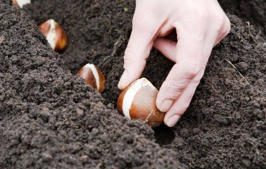 Что посадить в открытый грунт в мае
