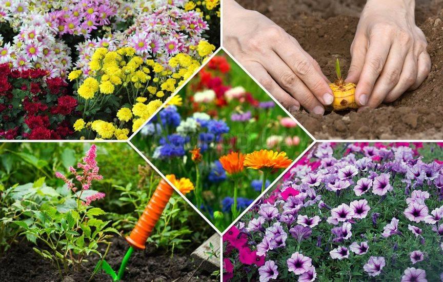 Какие цветы уже можно сажать в грунт