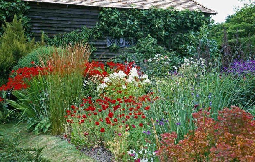 Цветы многолетники в огороде