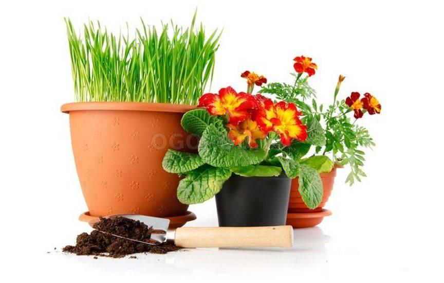 Календарь пересадки комнатных растений