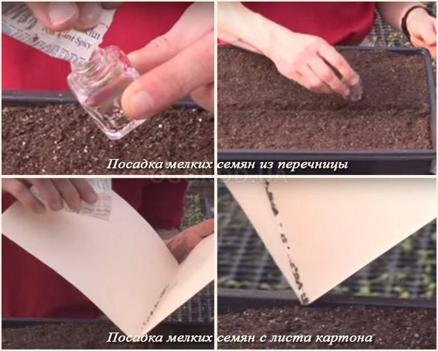 Как сажать мелкие семена