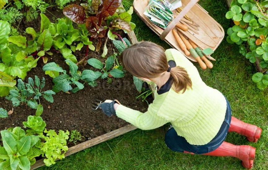 Что и как сажать в саду 237