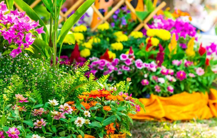 Лучшие двулетние цветы для дачи, фото