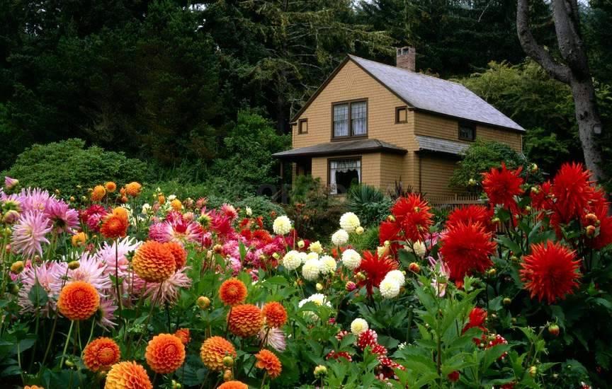 Фото цветов и участков с цветами