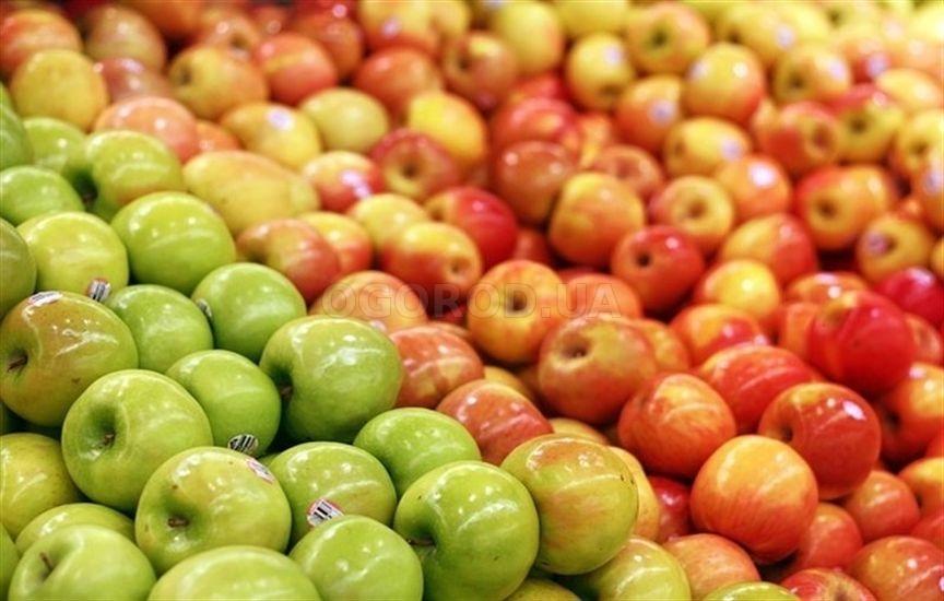 Почему подорожали яблоки в 2018 году