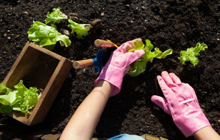 Что нужно посадить в огороде