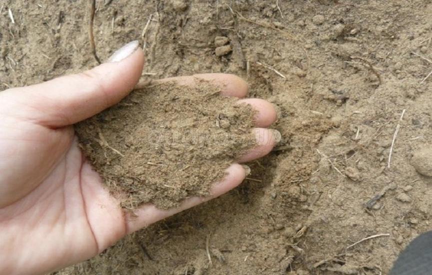 Особенности выращивания на песчаной почве 15