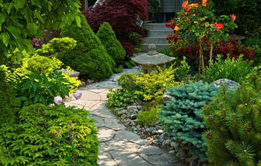 Лучшие хвойные растения для сада