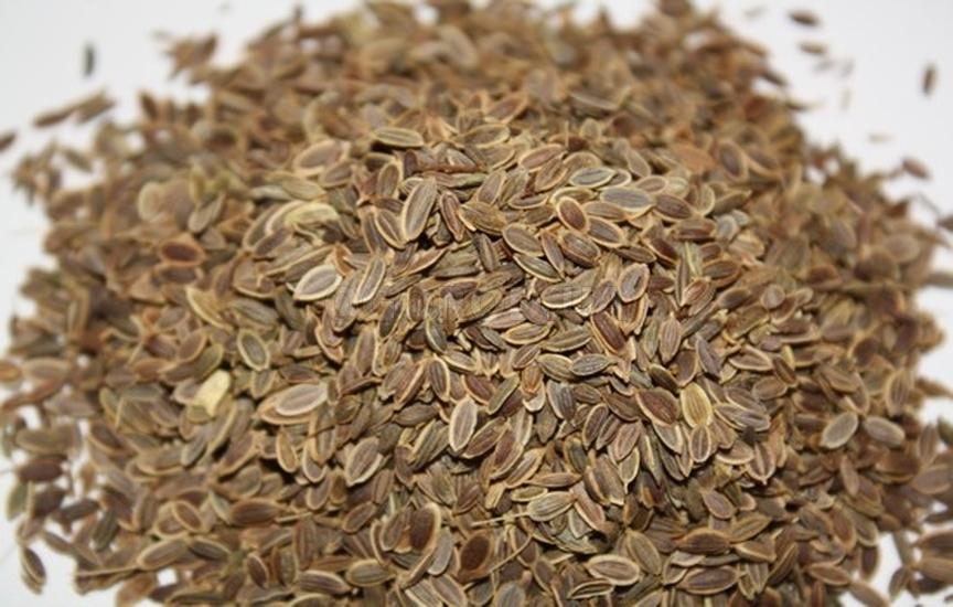 Семена укропа для лечения простаты