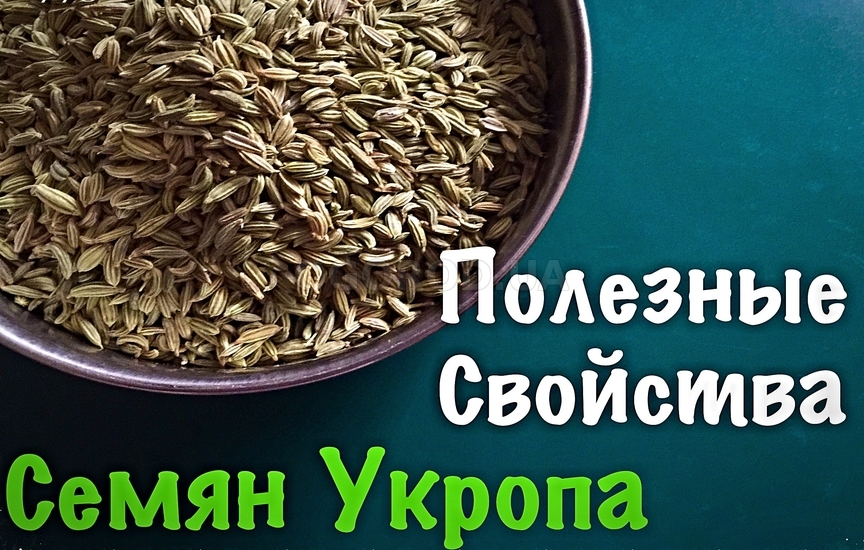 Семена укропа - полезные свойства и применение
