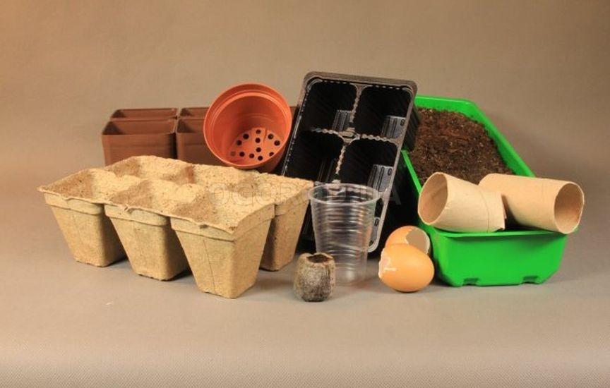 Подготовка ёмкостей для выращивания рассады тыквы