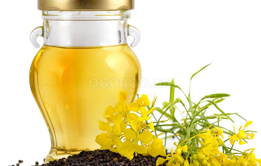 Из семян рапса получают высококачественное масло