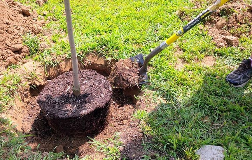 Подготовьте посадочную яму