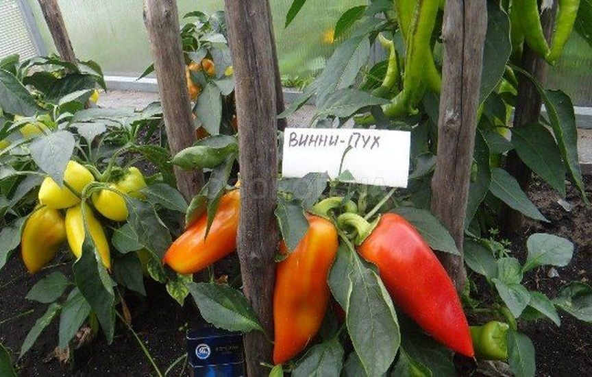 Характеристика и описание перца