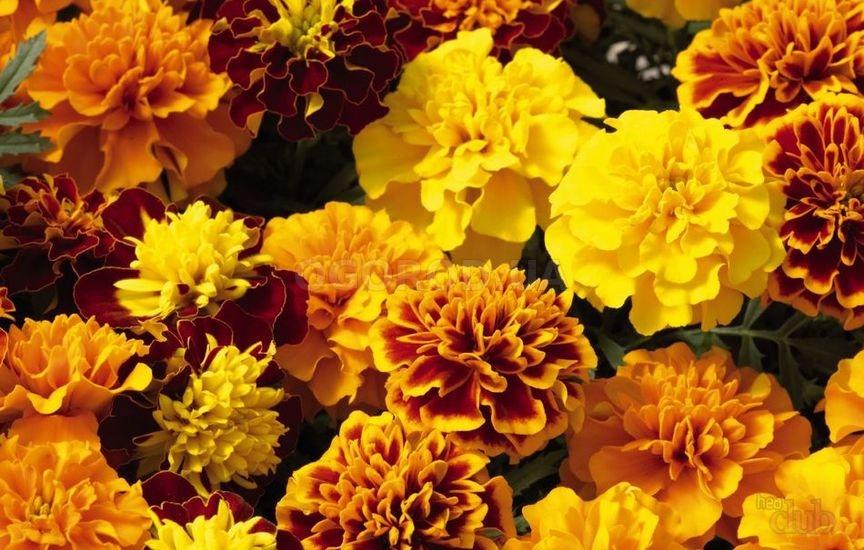 Полезны ли свежие цветки?