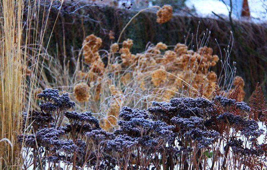 Зимовка многолетних цветов и правила подготовки
