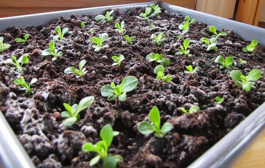 Выращивание рассады из семян 866