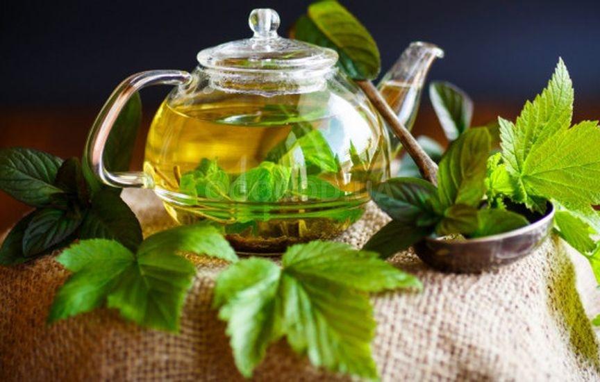 Чай из листьев лещины – польза и вред