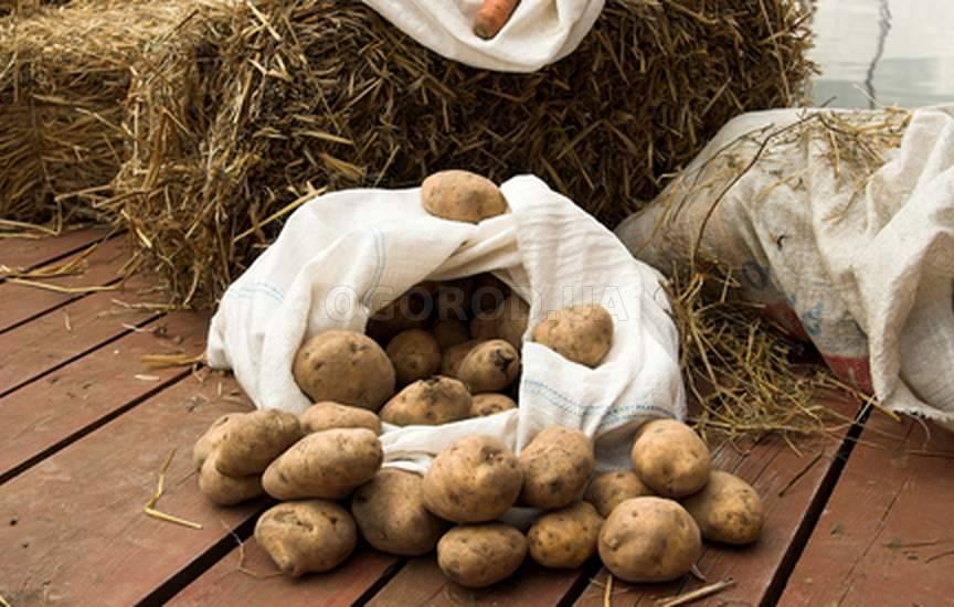 Болезни картофеля в погребе.