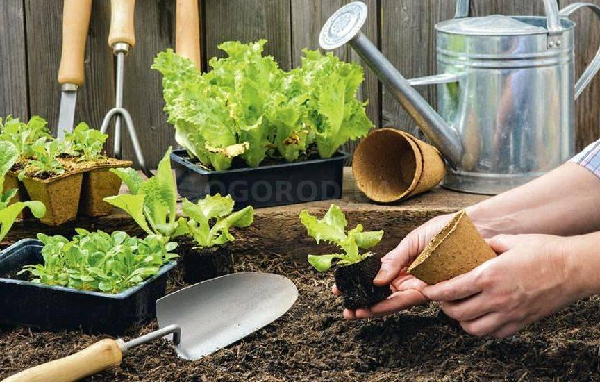 Сажаем растения в огороде 636