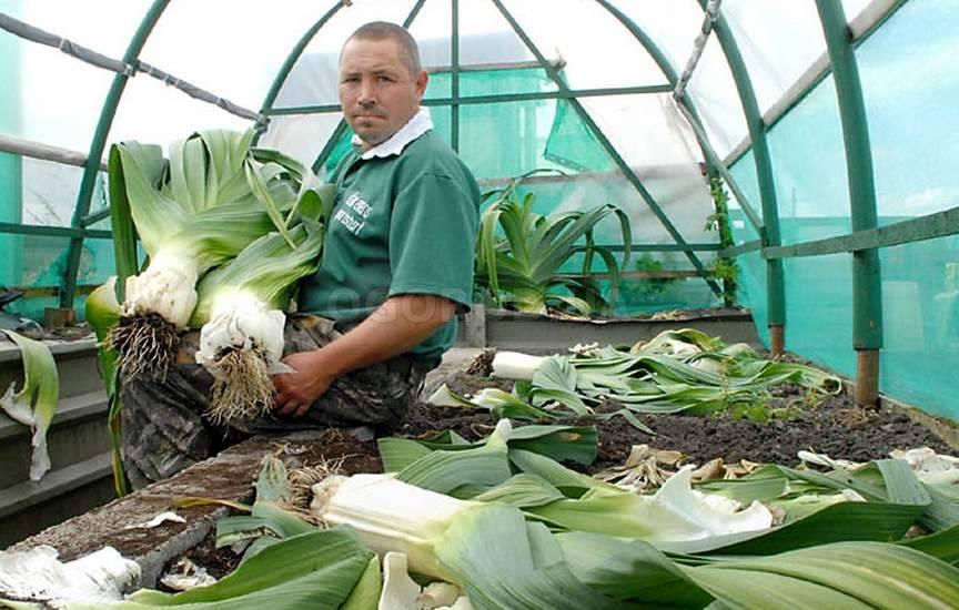 Выращивание лука-порея через рассаду 11
