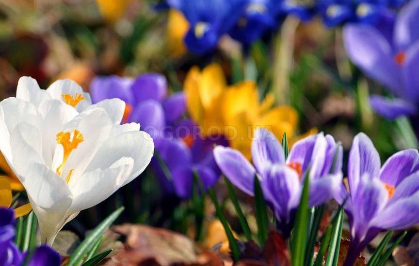 Как подготовить сад к весне