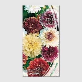 Хризантема индийская клеопатра выращивание из семян 52