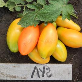 Семена томата «Луч»