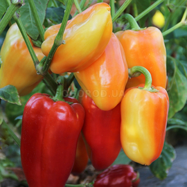 Семена перца сладкого «Валюша»