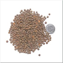 Семена чечевицы красной «Максим»