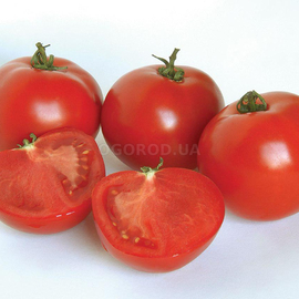 Семена томата «Апологет»