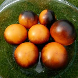 Семена томата «Orange Blue» (Голубой апельсин)