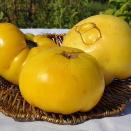 Семена томата «Dixie Golden Giant» (Дикси Золотой Гигант)