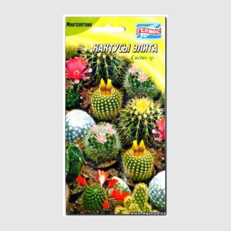 виды домашних кактусов фото и названия. уход