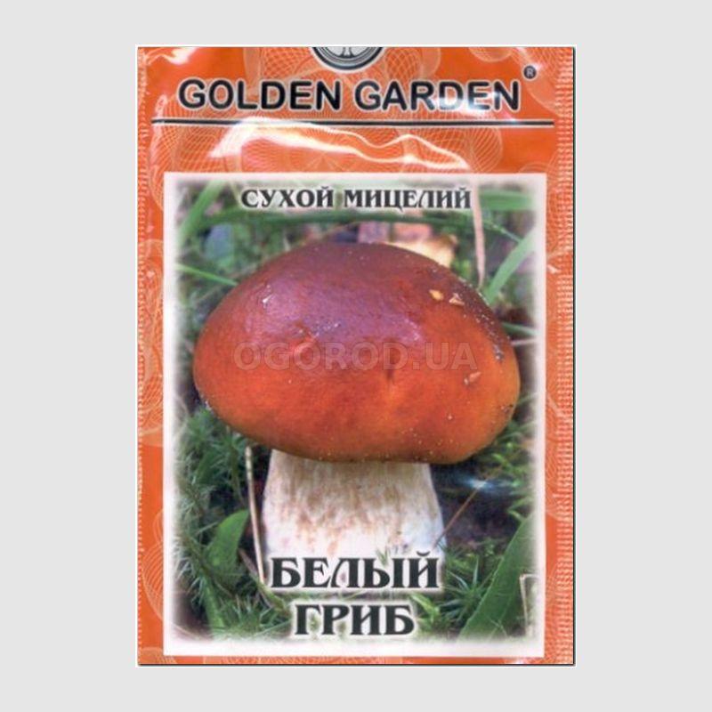 гриб ежовник обыкновенный фото
