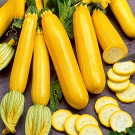 Семена кабачка «Золотинка»