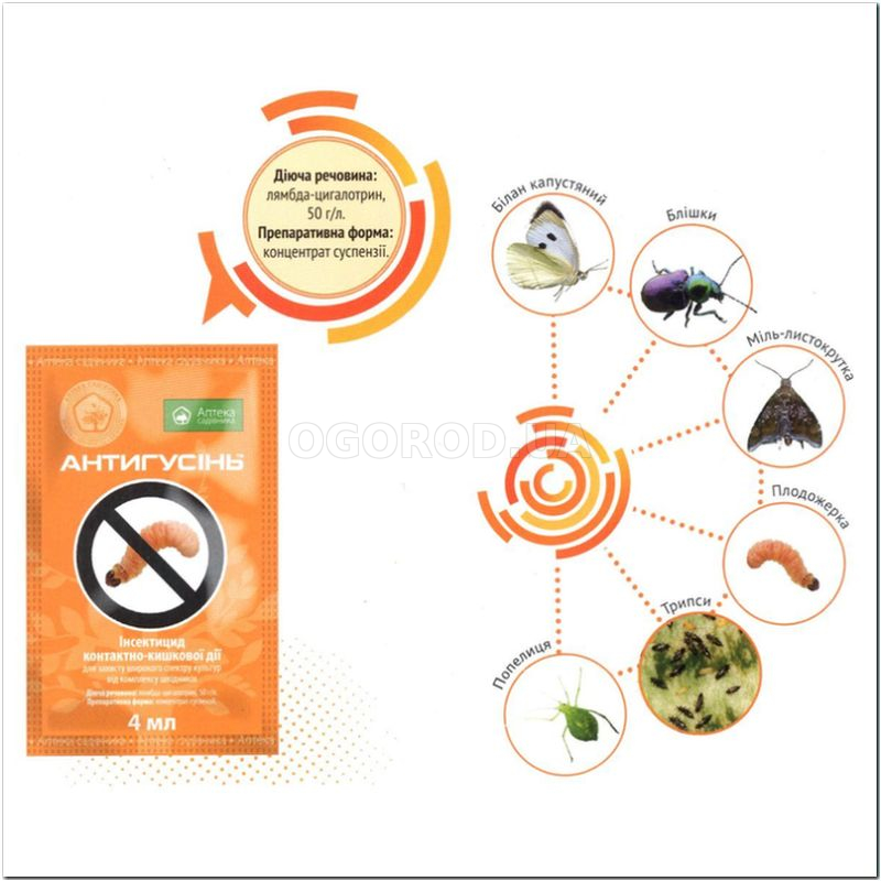 «Антигусень» - инсектицид системного действия