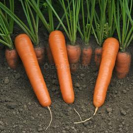 """Семена моркови """"Нантес"""""""