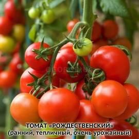 """Семена томата """"Рожденственский"""""""