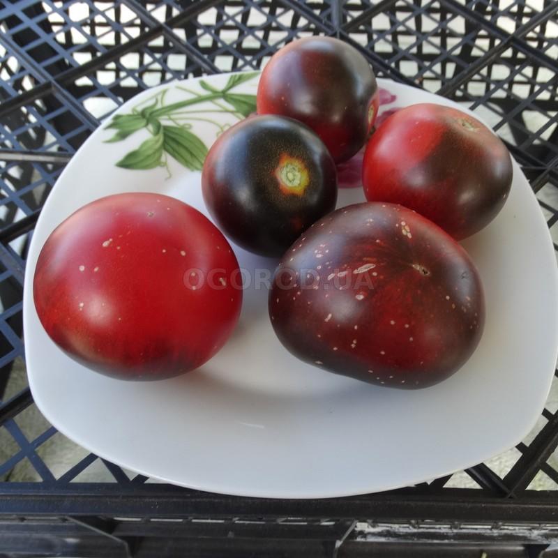 Томат Красный уголь описание и характеристика сорта урожайность с фото
