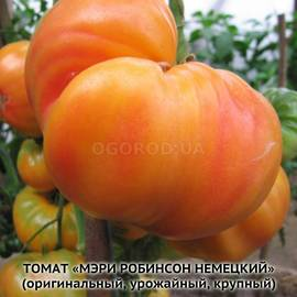 Семена томата «Мэри Робинсон немецкий»
