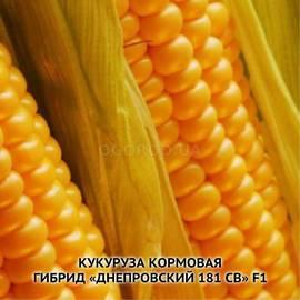 Семена кукурузы «Днепровская 181 СВ» F1 (кормовая)