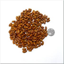 """Семена фасоли """"Дар"""""""