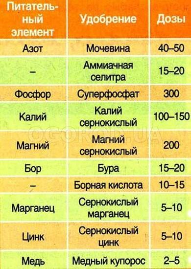 https://ogorod.ua/image/1118_7498_1499420345_2.jpg